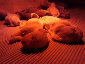 a_pups_born_03