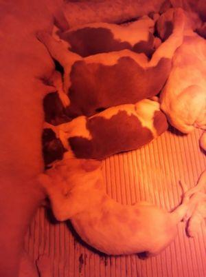a_pups_born_04