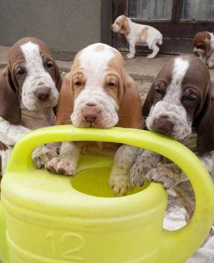 puppies_04